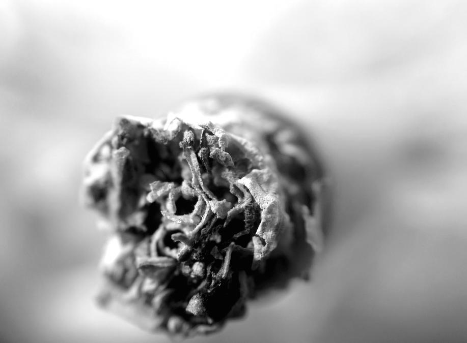 Hechos y estadísticas de la Marihuana