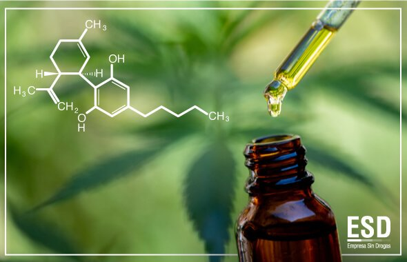 El cannabidiol (CBD) y la aplicación de pruebas para detección de drogas en la empresa